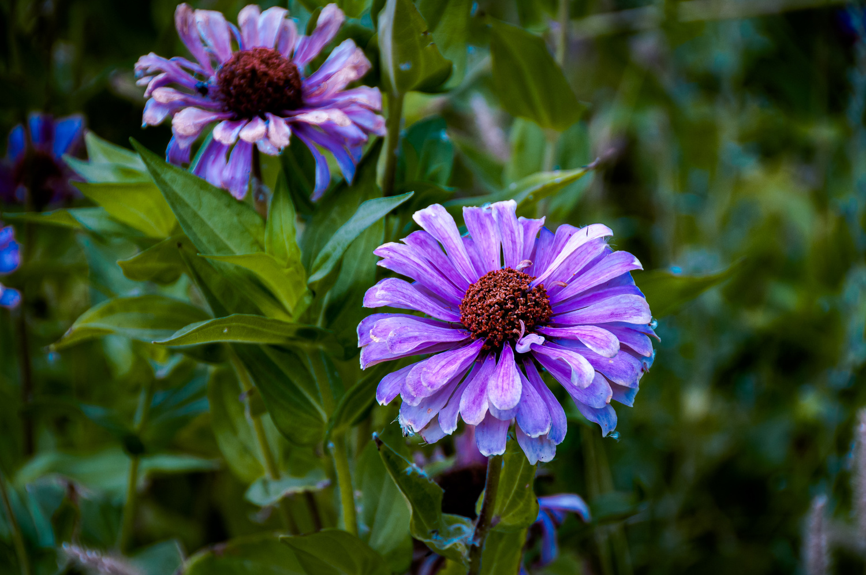 It's a purple. by Jon Stephenson