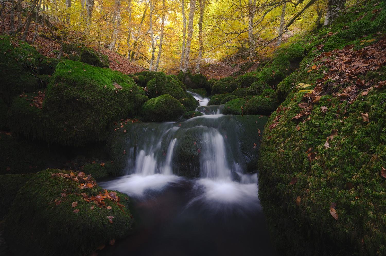 Forest by Luis Martínez