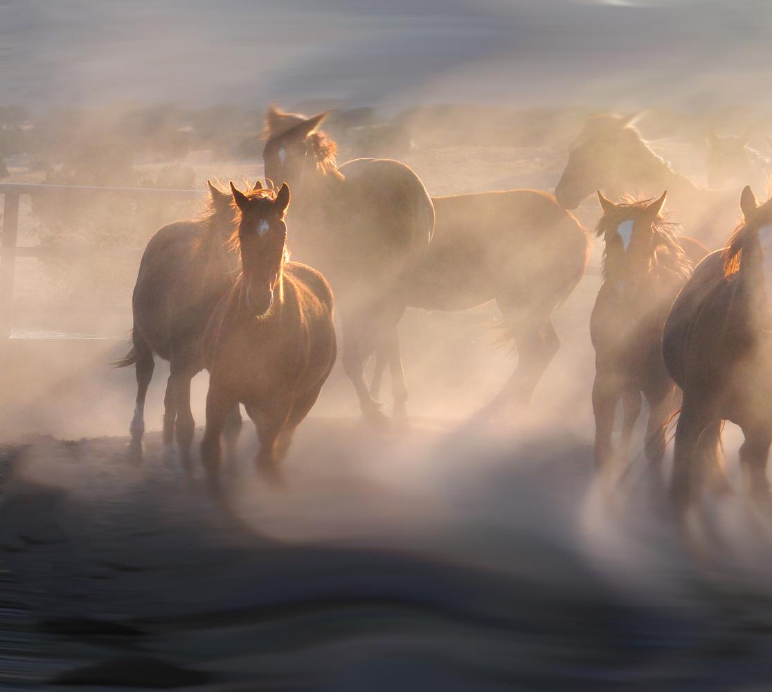 Equine Dust Devil by Ken Dobbs