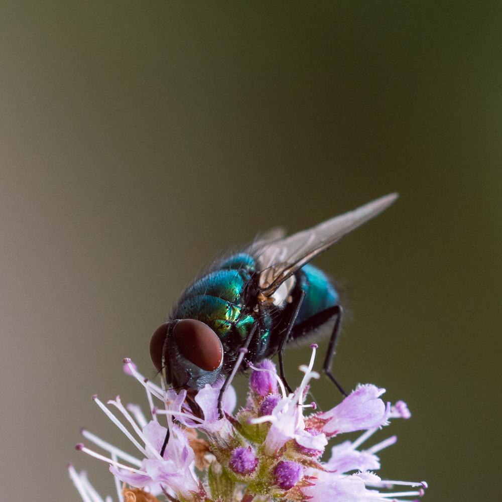 Fly beauty by Maria Öberg
