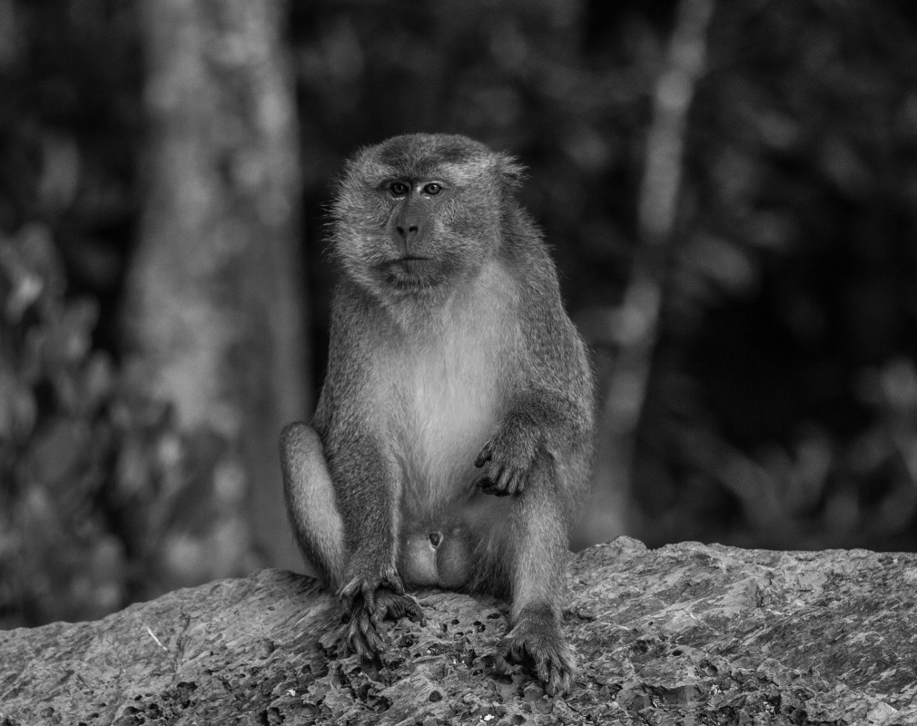 Living Crab Eating Macaques by Jan Husar