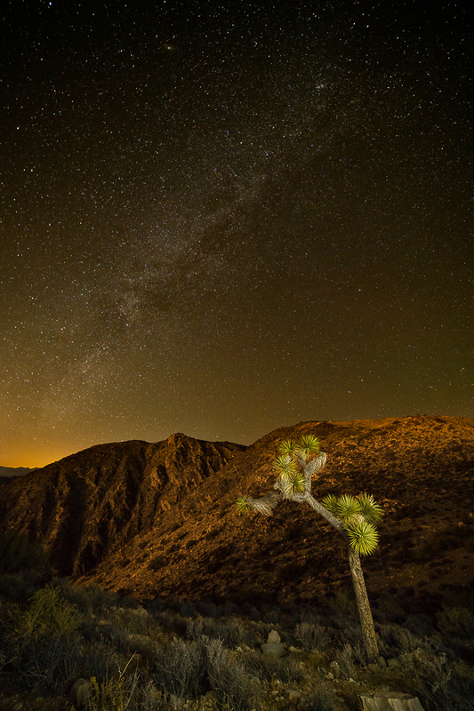 Joshua Tree at Keys View by TImothy Tichy