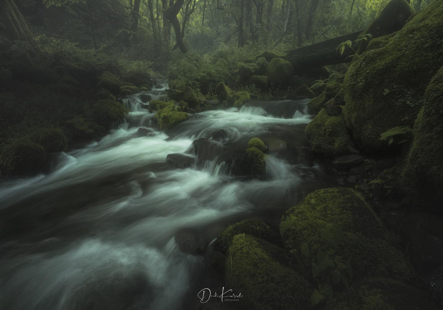 Dark Green by Daiki Kuroda