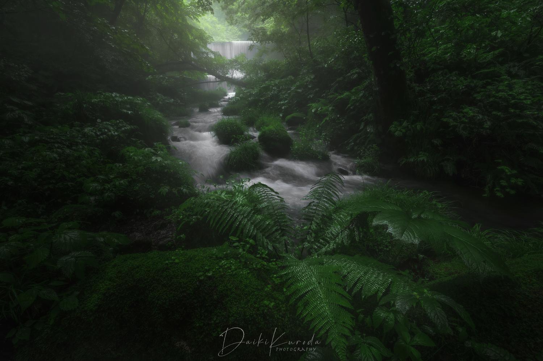 Kitanizawa Valley Stream by Daiki Kuroda