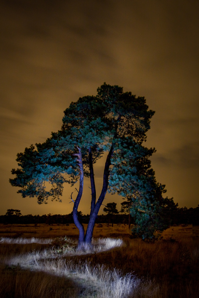 Light painting a path around a tree by chris aandewiel