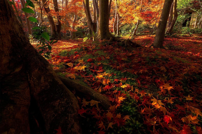Autumn at Giouji Temple by Yuta Katayama
