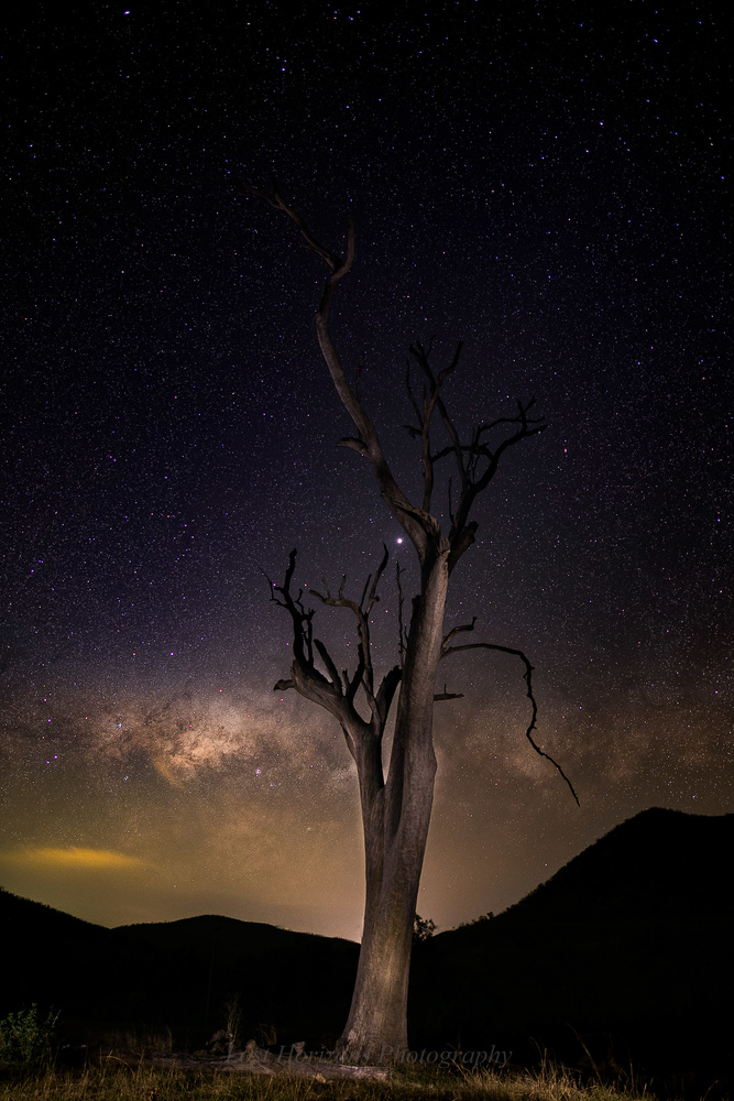 Murrumba dead tree by Dave Rech