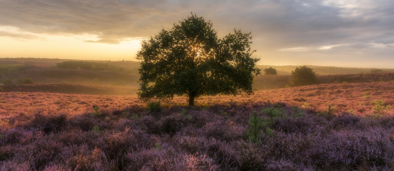 Sunrise at the Netherlands by Falko Schulze