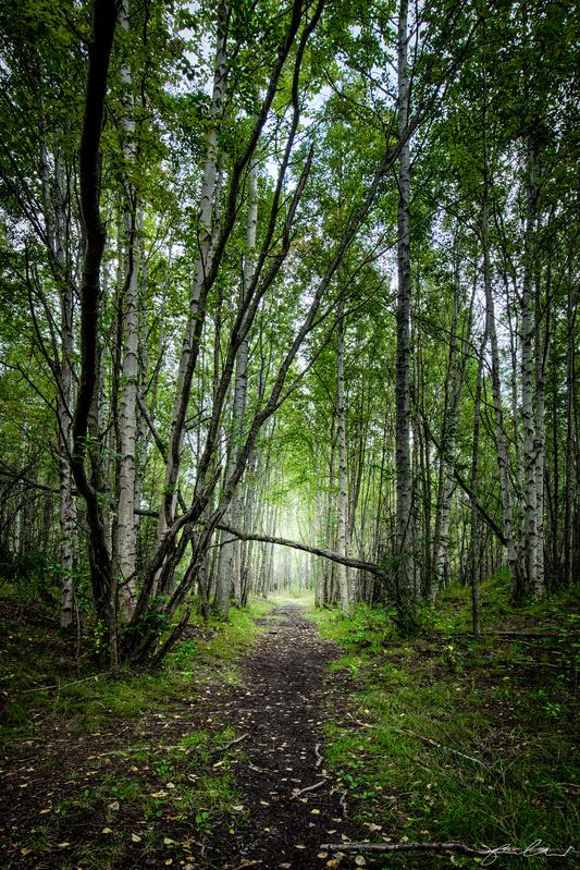 Alaska Forest - Anchorage Alaska by Fraser Almeida