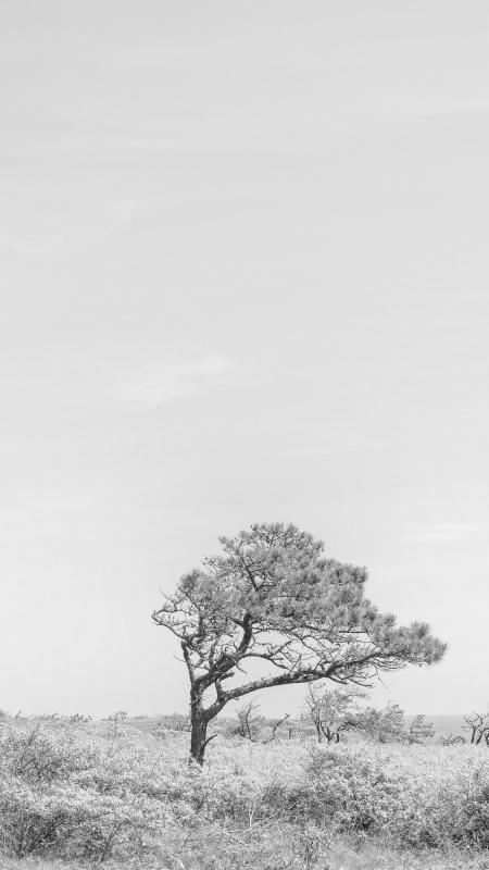 Windswept by Matt Owen