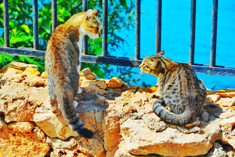 The cats are like little tigers. by İsmail Alper Şenova