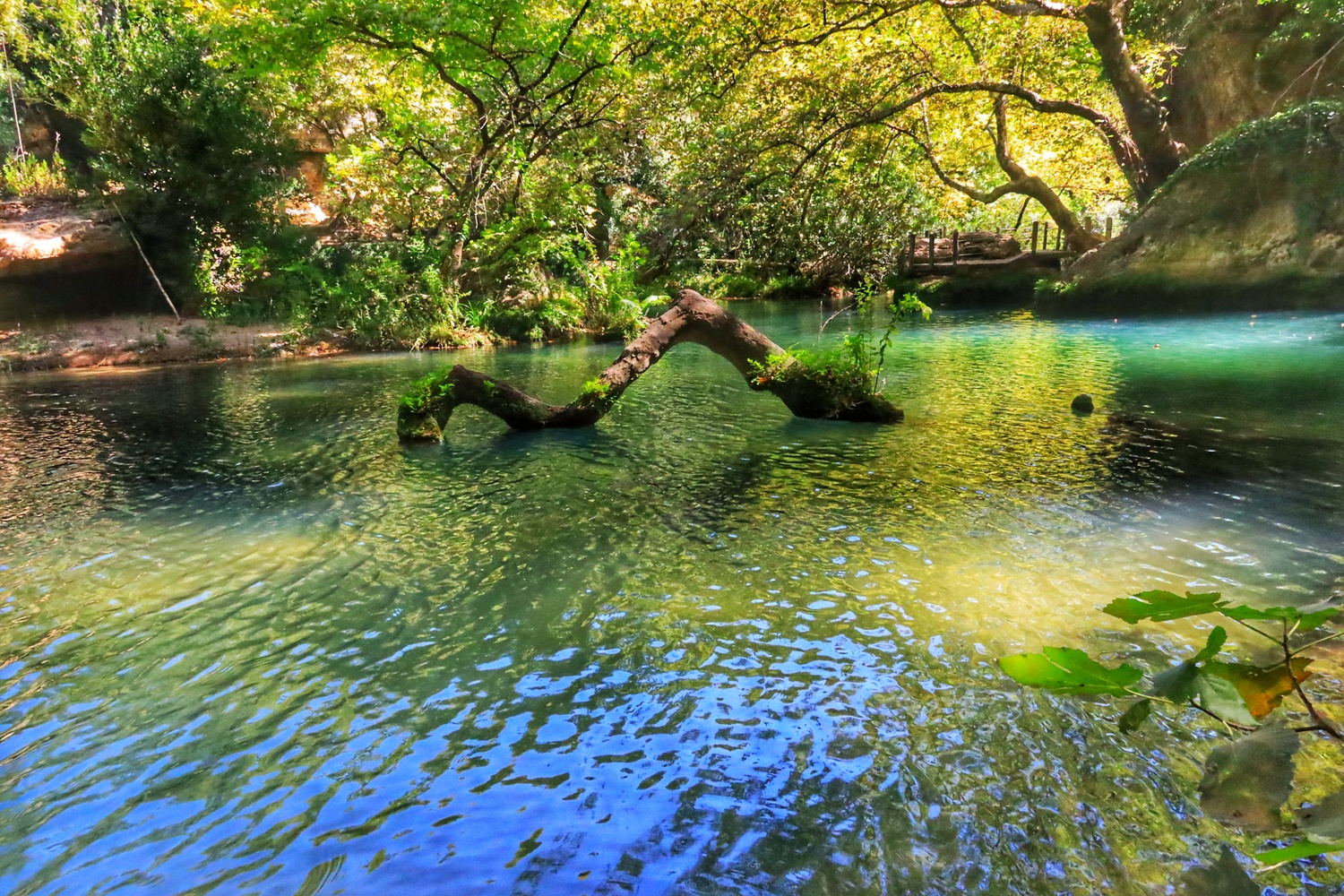 tree in the middle of the river by İsmail Alper Şenova