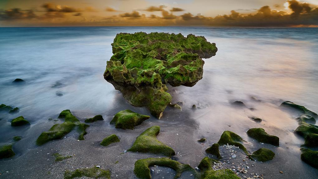 Coral Cove Park by Floyd Dean