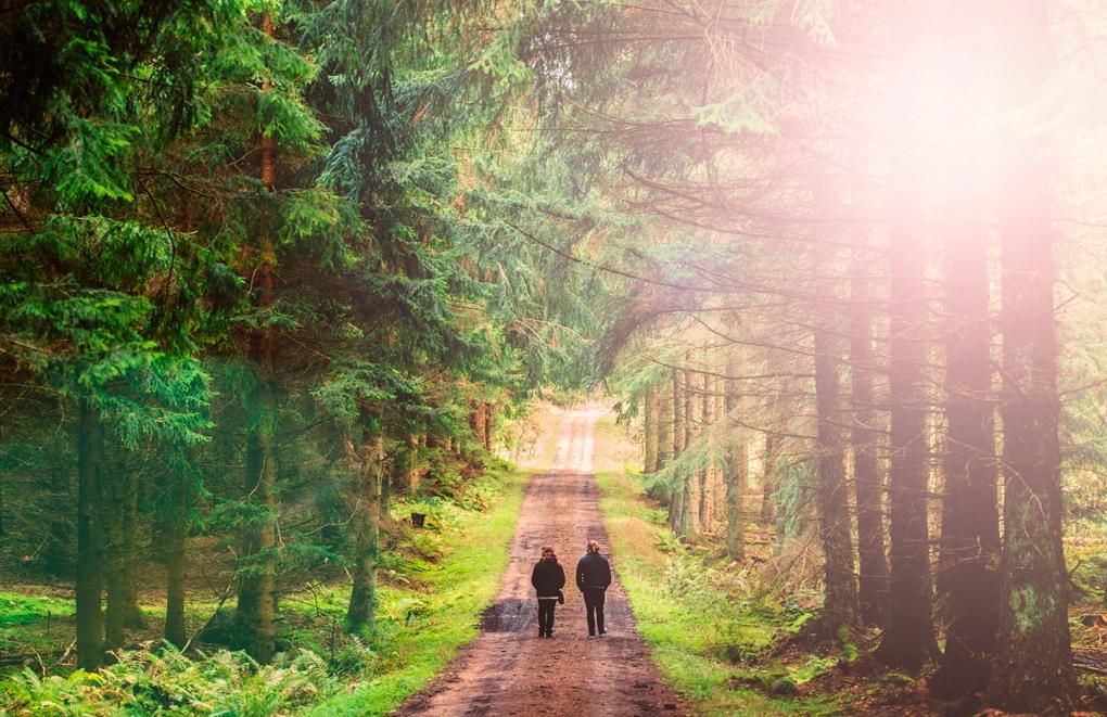 forest walk by Stefan Johansson
