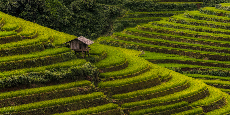 Mu Cang Chai Terraces by Cory Marshall
