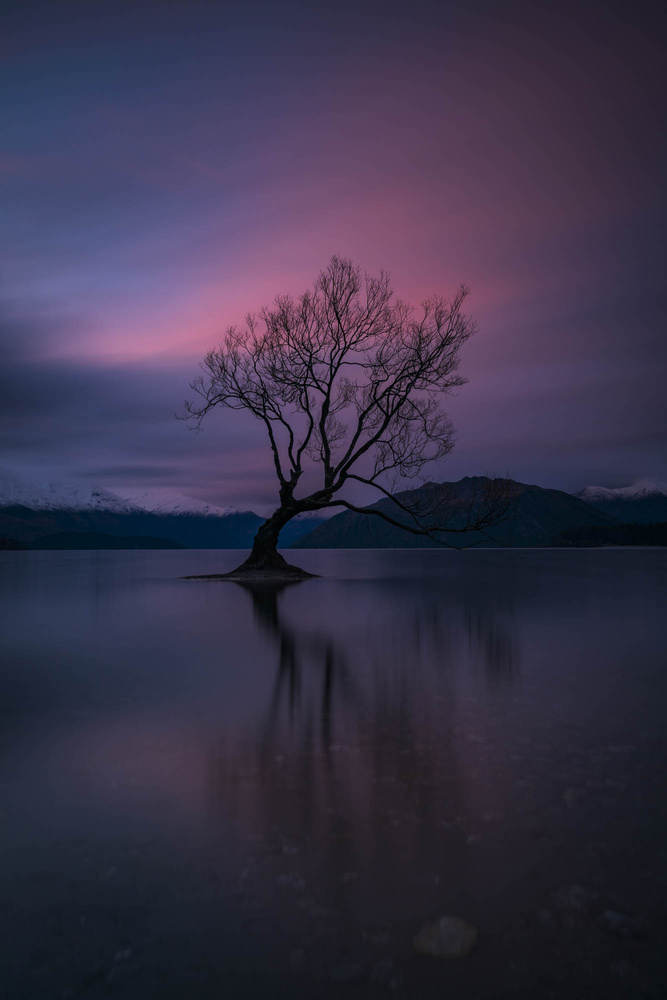 Wanaka Tree by Cory Marshall