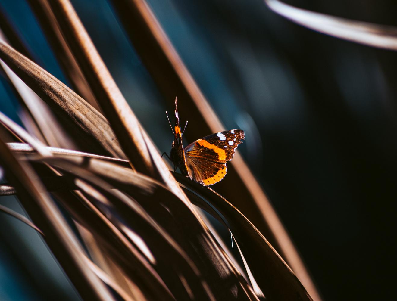Autumn Butterfly by Violet Trujillo