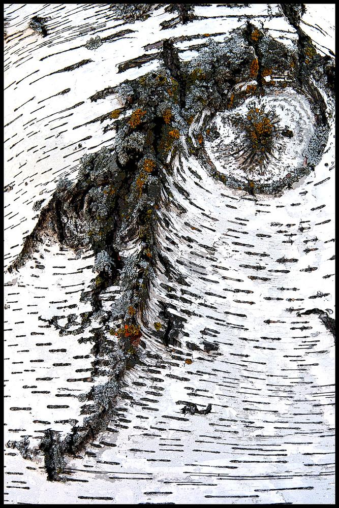 Birch by Dan Santema