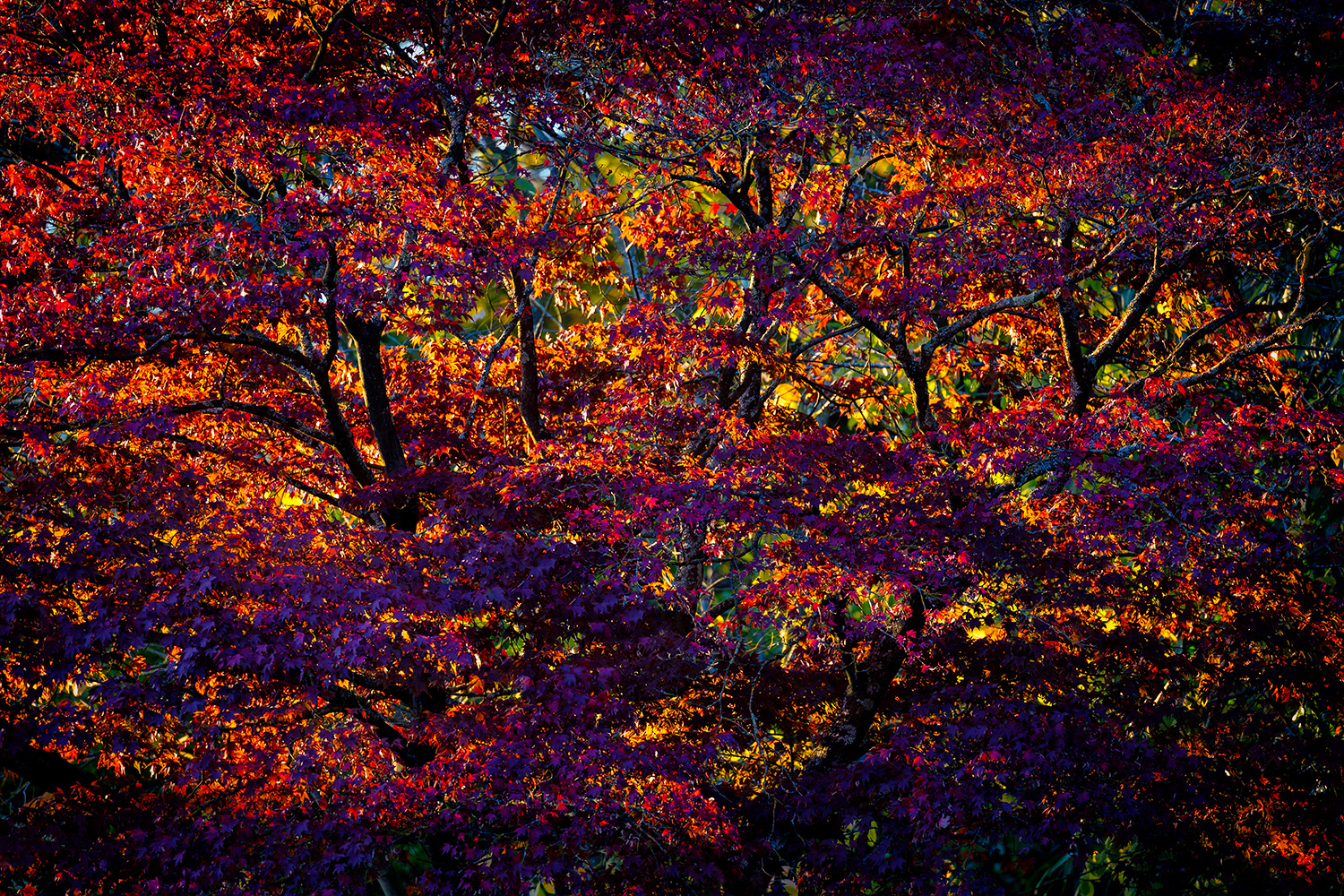 Fall Colors by Rob Lace