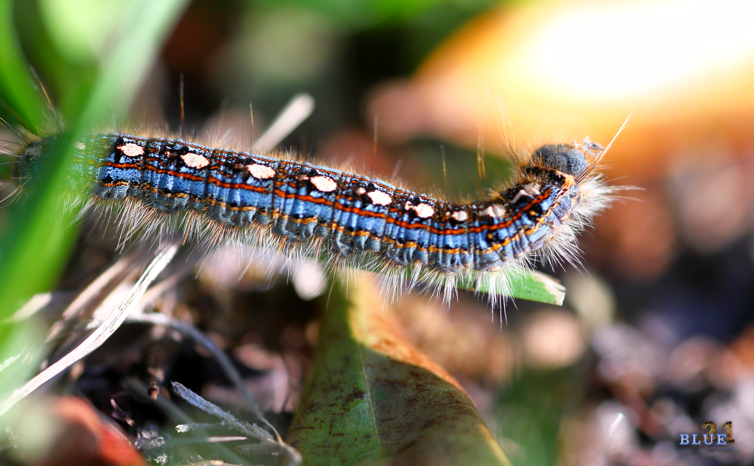 Caterpillar Close-up by BJ Priest
