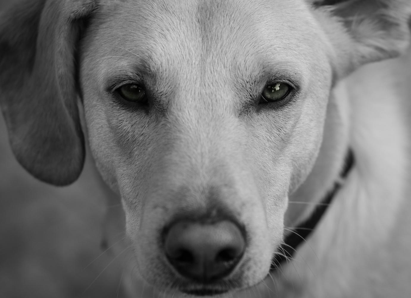 Charming Dog by Alek Mantz