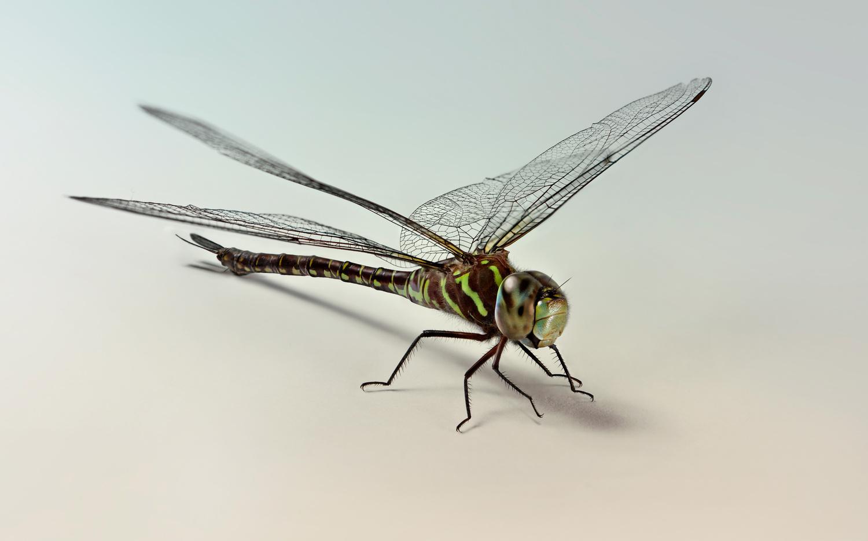 Dragonfly by raul dighero