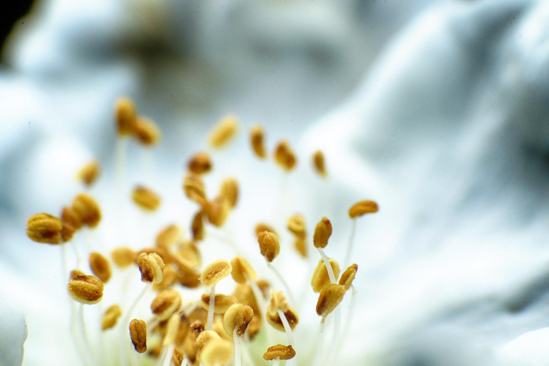 White Flower by john rundberg