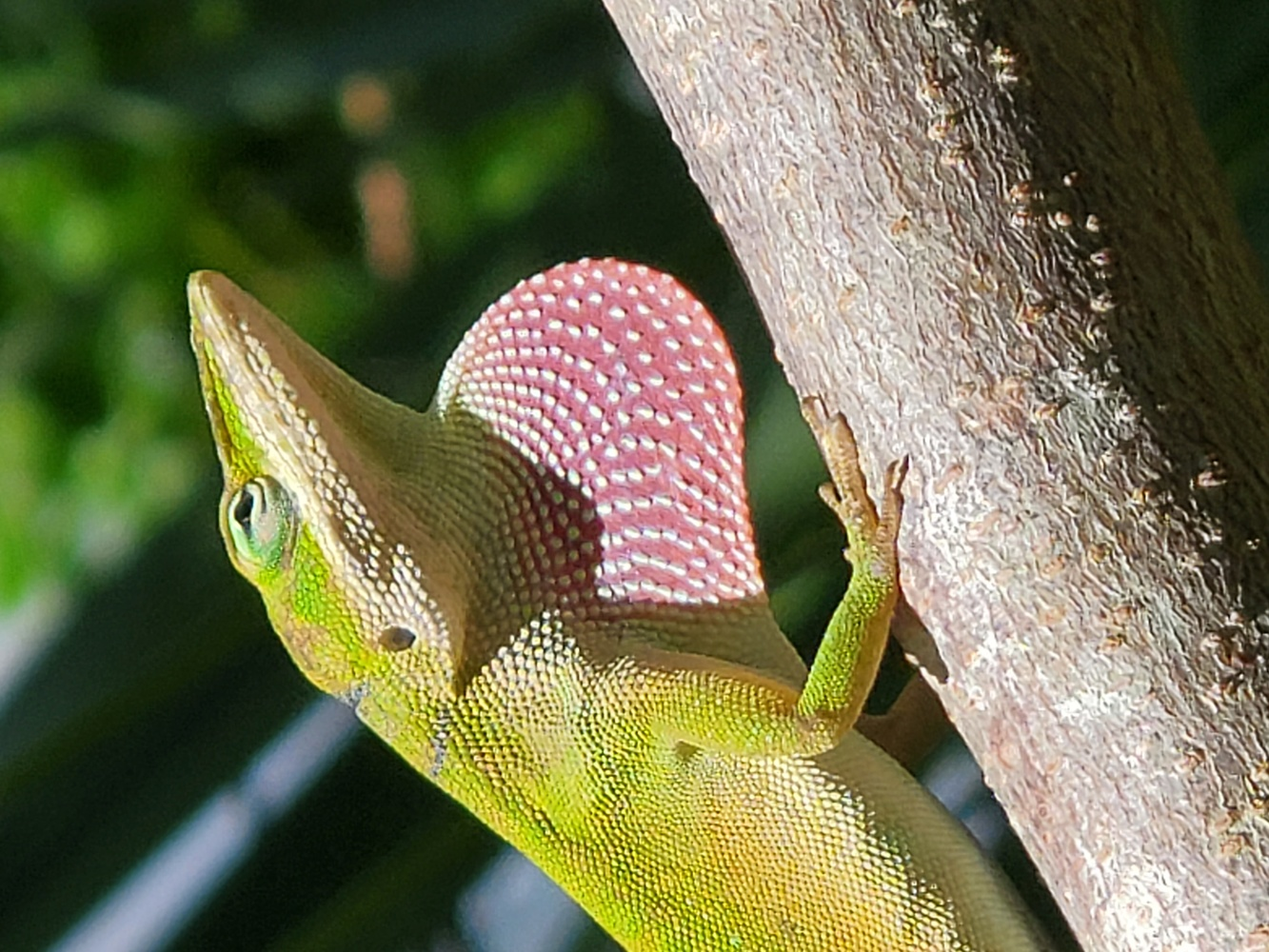 Lizard Warning by Kathy DITTON