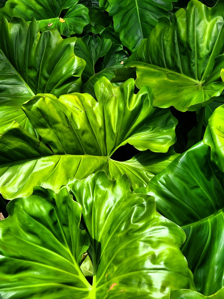 Foliage by Kathy DITTON