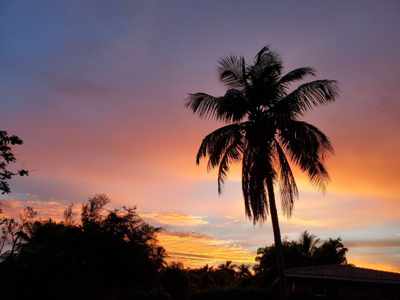Tropical Sunser by Kathy DITTON