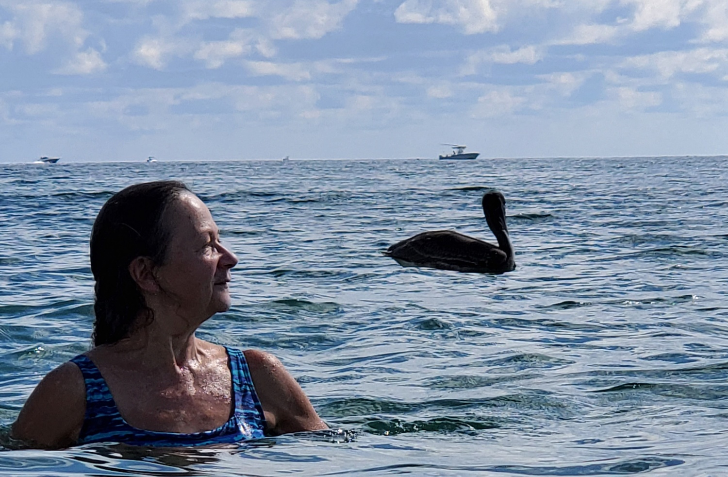 Pelican Summer by Kathy DITTON