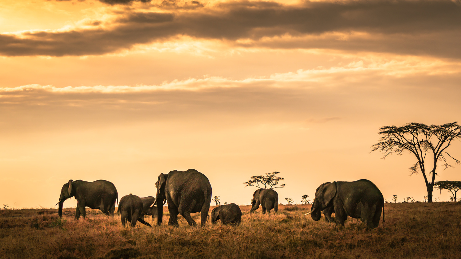 Ellies at sunset. by Hanif H