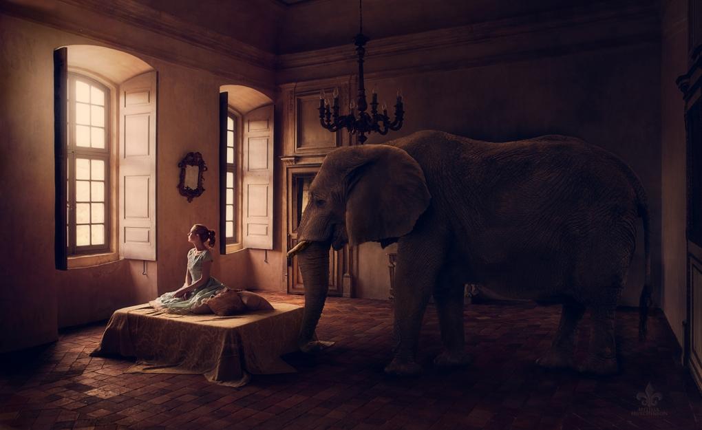 Elephant in the Room by Jen Brook