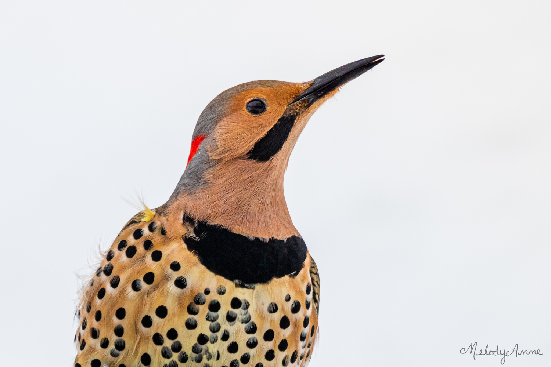 Big Bird by Melody Mellinger