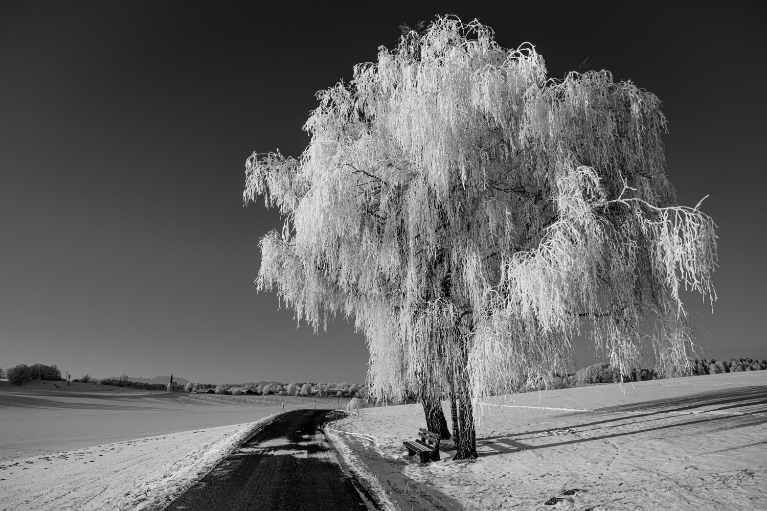 Freezing Tree by Martin Weiss