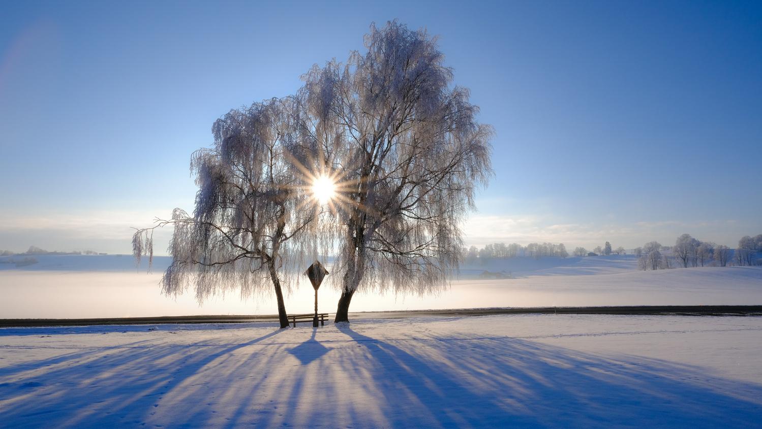 Winter sun by Martin Weiss