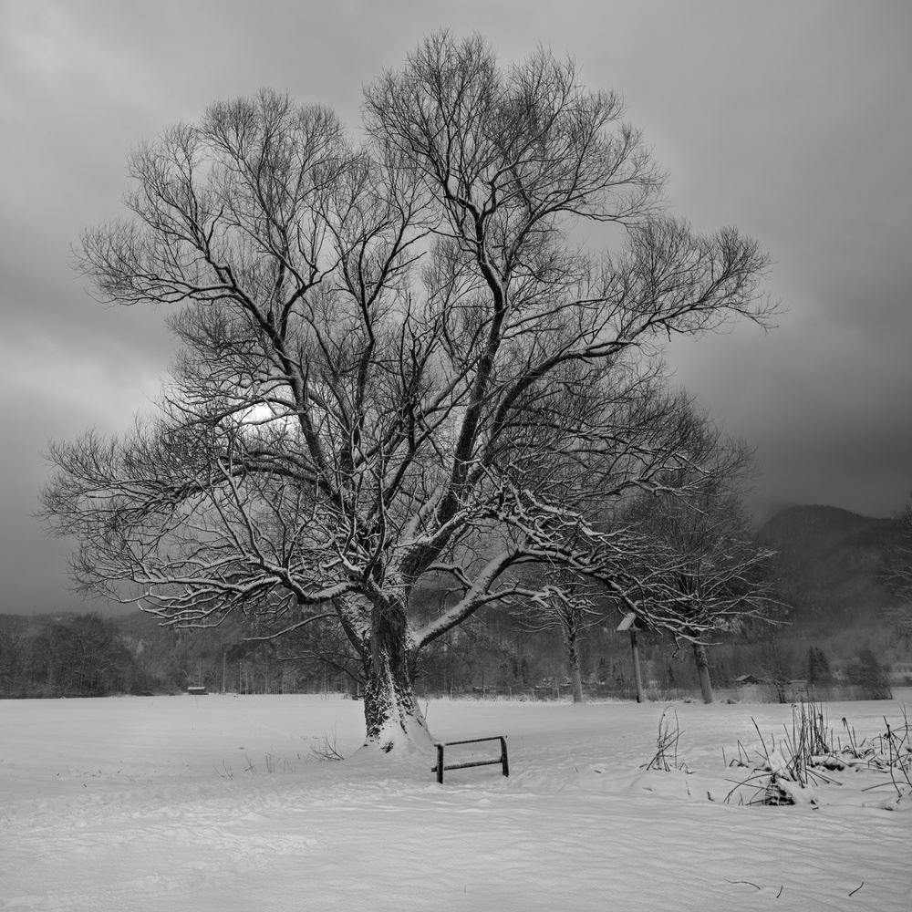Winter Tree 2 by Martin Weiss