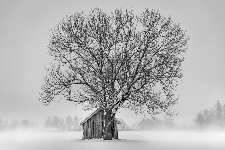 Winter Mist by Martin Weiss