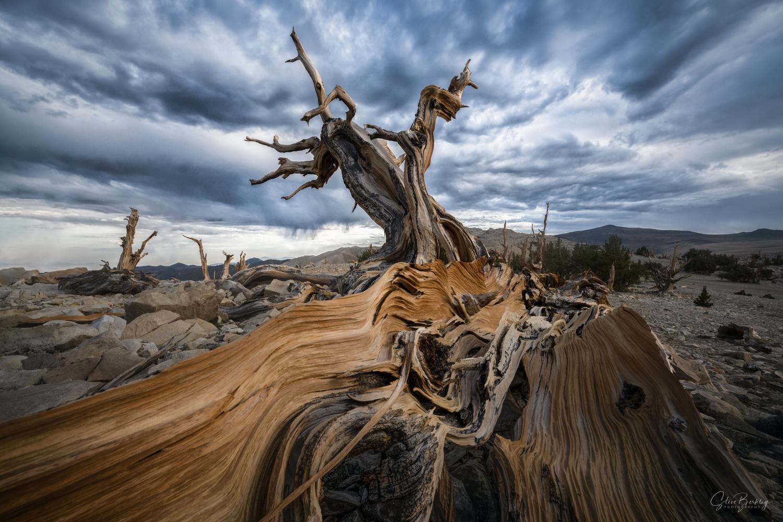 The Elder's Reach by Steve Berkley