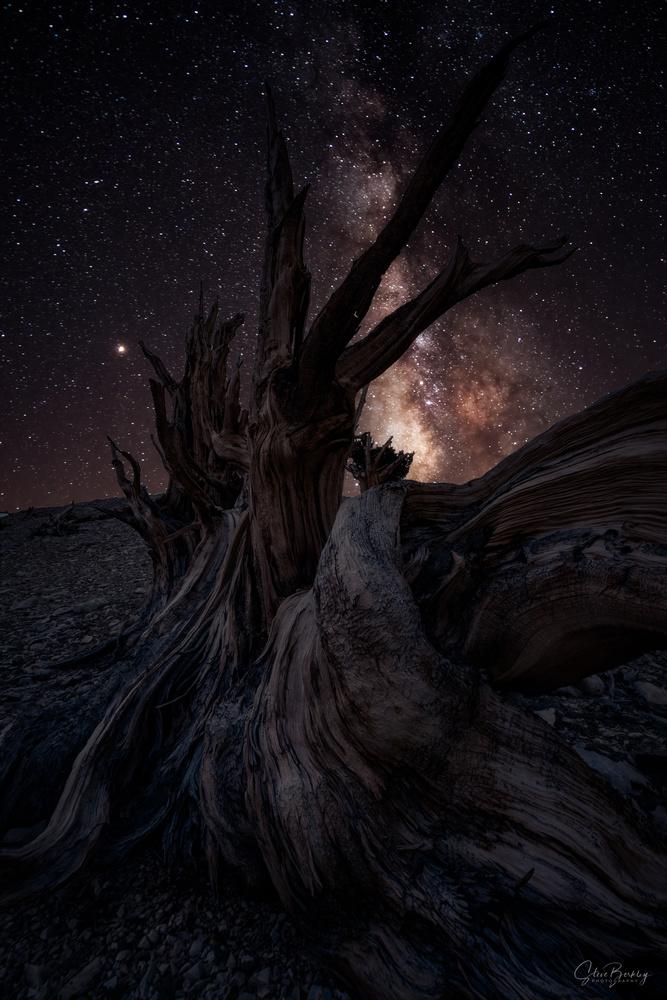 Timeless IV by Steve Berkley