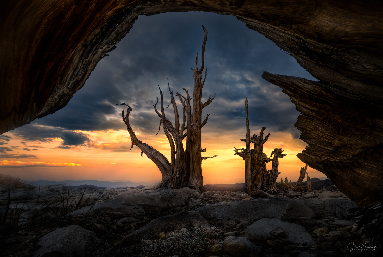 Ancient II by Steve Berkley