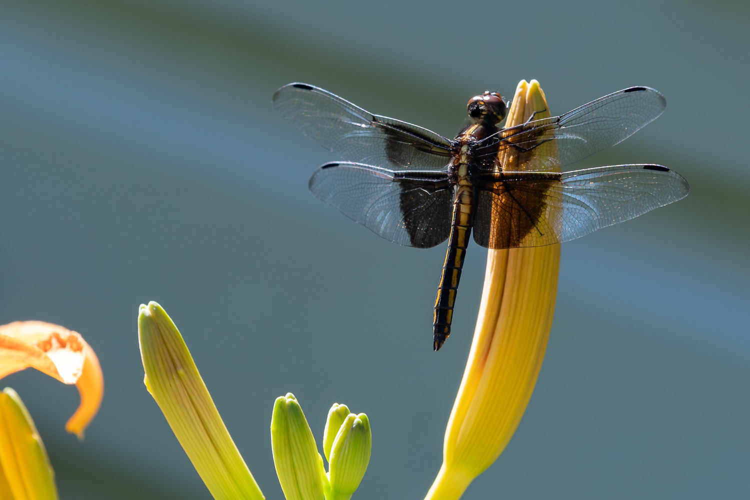 Dragonfly resting by Gary Tole