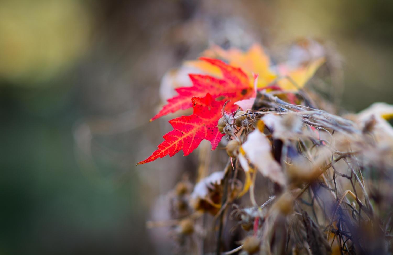 Autumn leaves on fence by Richard Barron