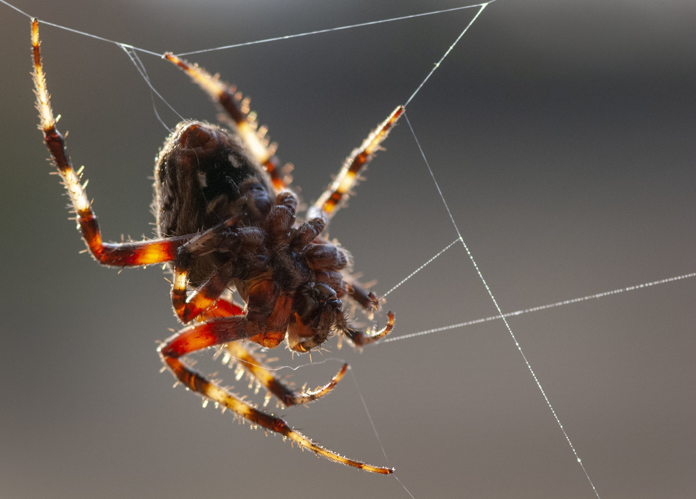 Along came a spider by Richard Barron