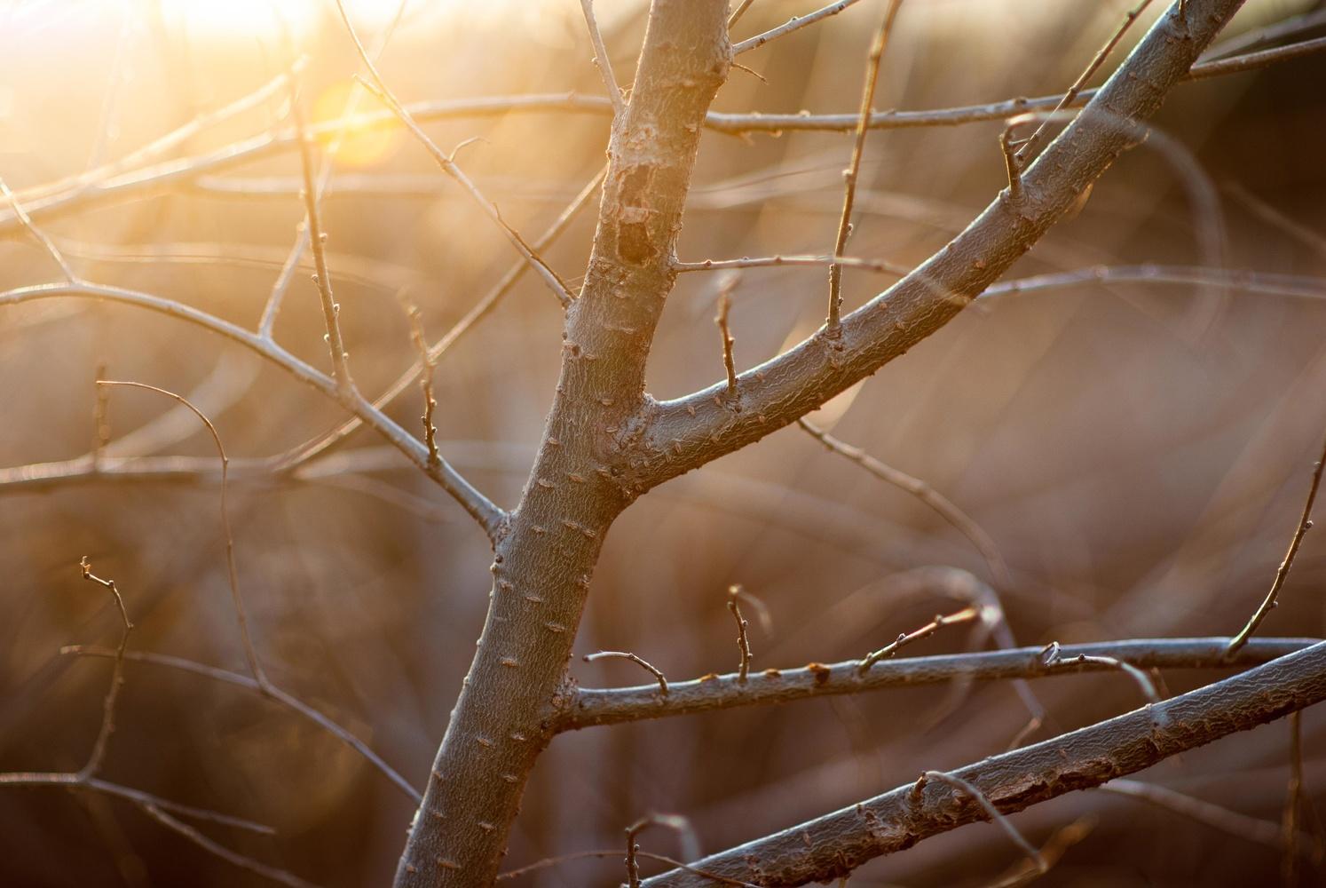 Branches at sunset, Byng, Oklahoma by Richard Barron