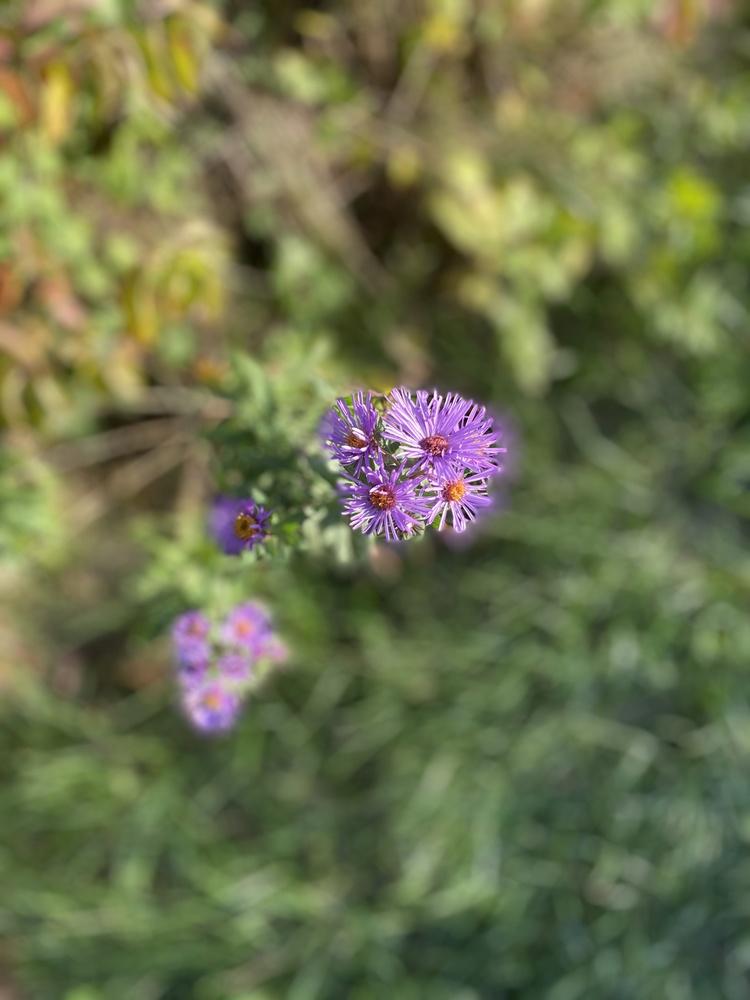 The last purple flower by Rohit Burra