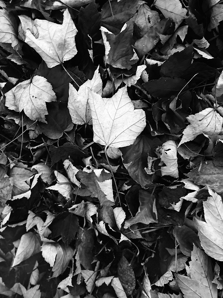 Monochrome leaves by Rohit Burra