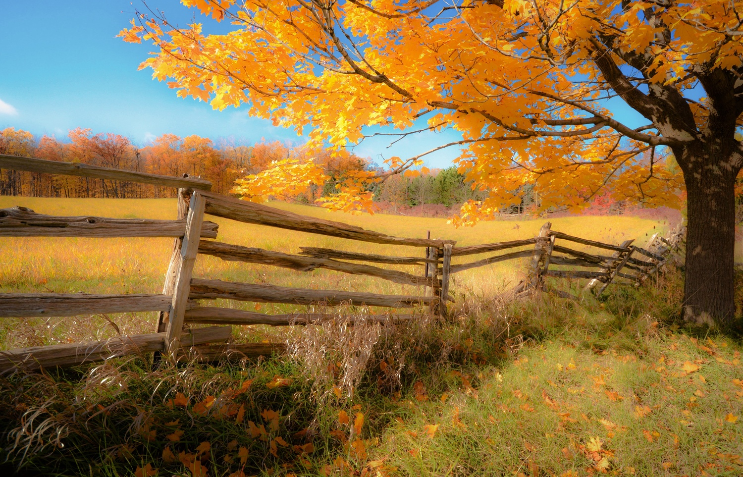Ideal Autumn by karl anderson