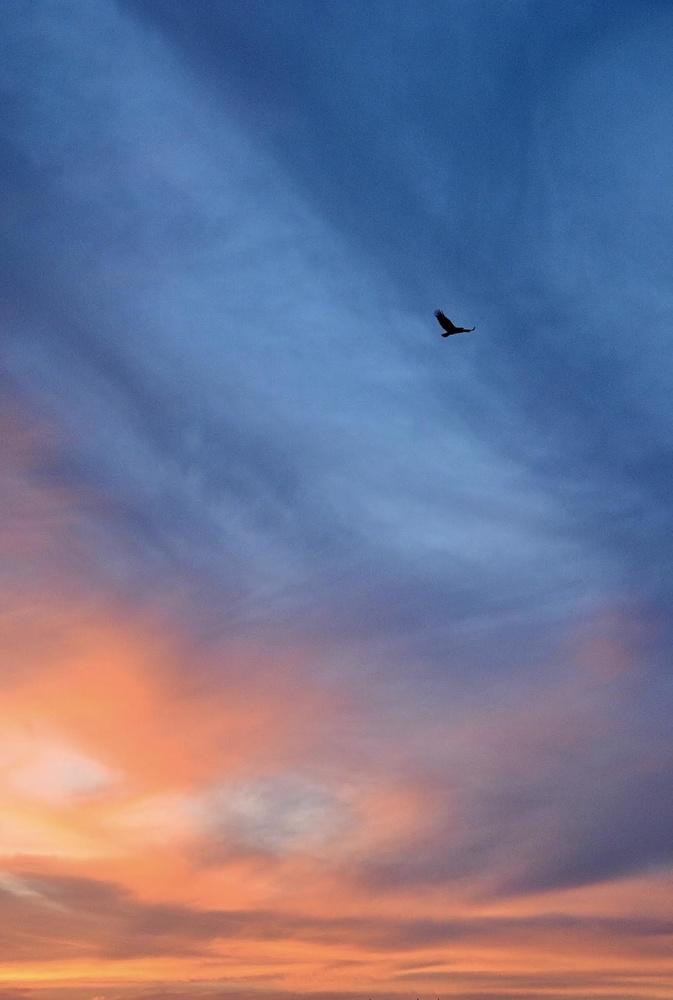 Soaring high by Prabhat Kumar