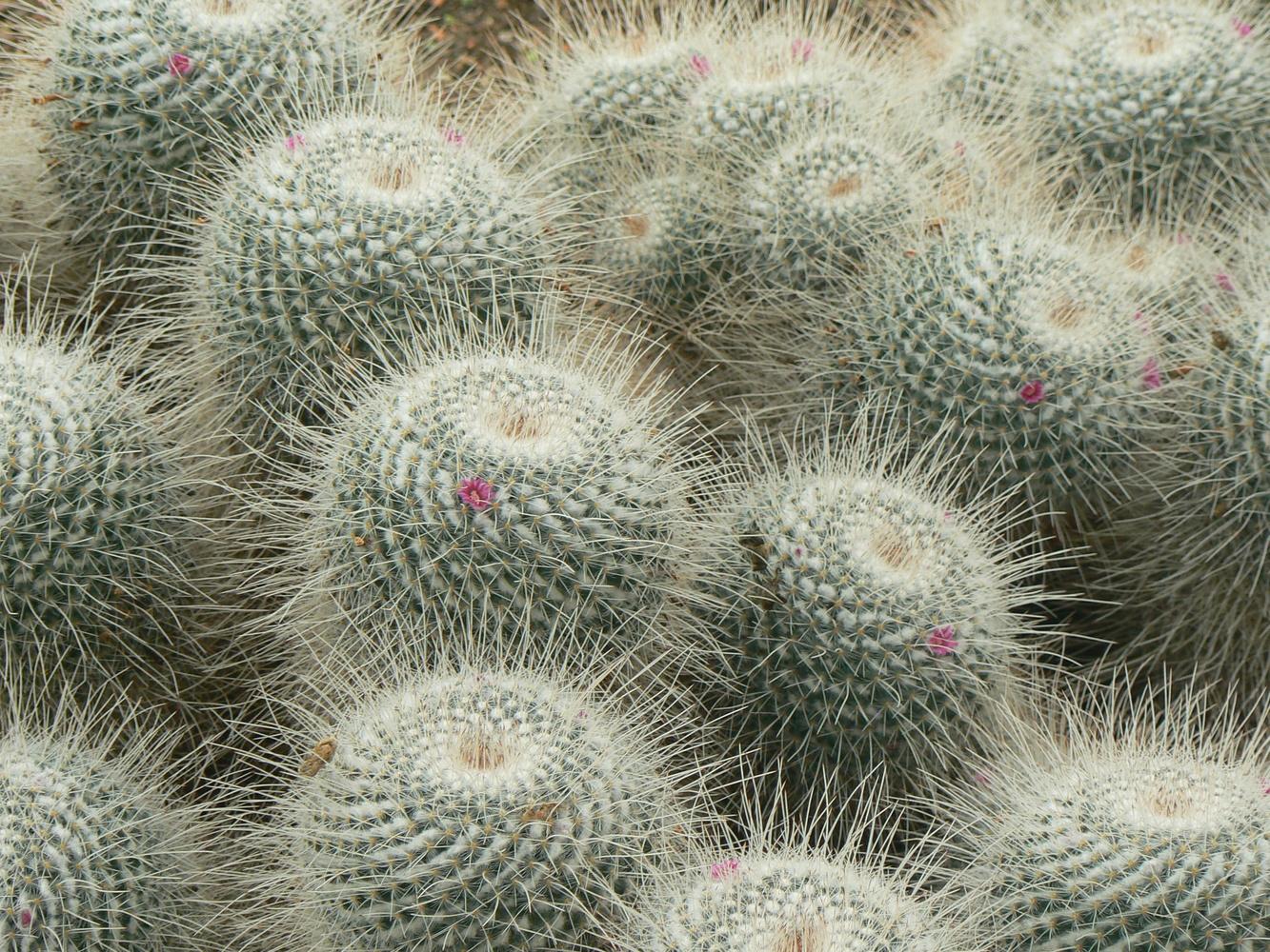 Cactus by Paul Hammond